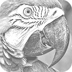 RFPlayer Parrot